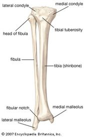 Tibial Trading System